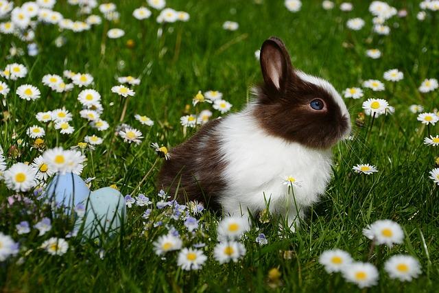 králík a květiny