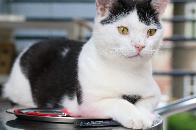 kočka v kavárně